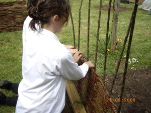 hurdle weaving with Haygrove Eco team